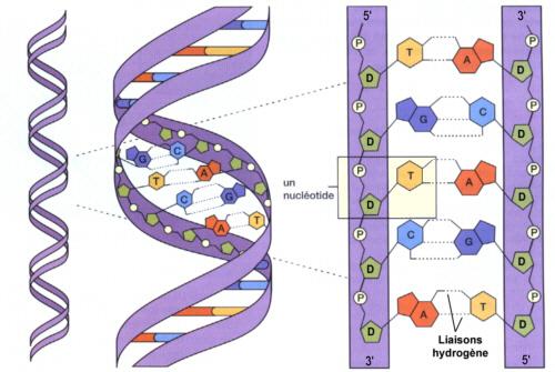 biologie de la reproduction humaine pdf