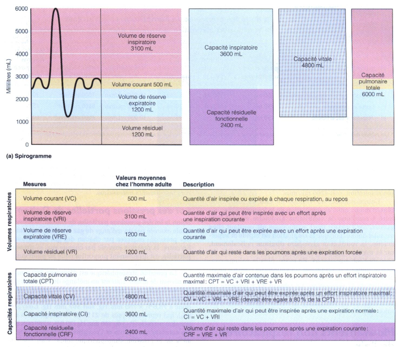 Biologie pta - Capacite calorifique de l air ...